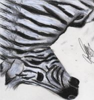 Charcoal Zebra by dark-angel1912