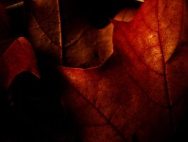 autumn red by narare