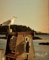 Seagull at His Post by Alynny25