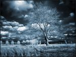 Home Tree II infrared... by MichiLauke