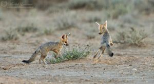 Foxy Playtime by MorkelErasmus
