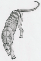 97. Thylacine by diaszoom