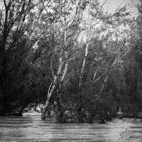 The River IV by NNarcissus