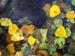 Autumn Leaves by NicPi