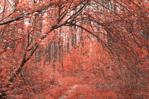Forest Arch Trail - Salmon Pink by somadjinn