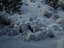 Canadian Winter by Pentacle5