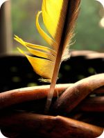 Finch Feather by Mayke920