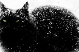 Black Cat in the Snow by DarthBlue1593