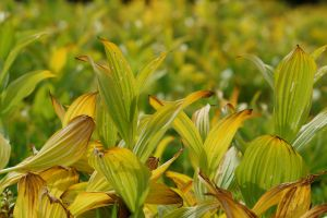 Plants 1309.01 by Dilong-paradoxus