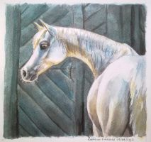 Horse watercolor gift 2 by Twarda8