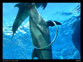 Dolphins at Play by nw15062