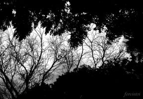 Trees or wing of  heaven by forvintri