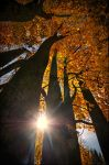 The colors of Fall... _3_ by my-shots