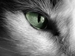 Cat Eye by xxIMPERFECTIONS