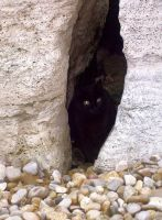 Cat and Marble by Ivette-Stock