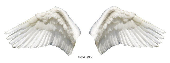 Wings 2 Stock photo by MariaRaute2
