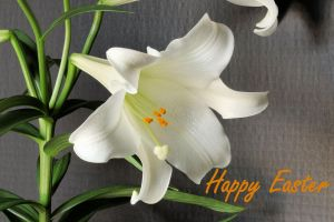 Easter Lily by digitalpix4all