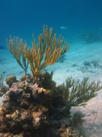 Underwater - Golding Cay by Lauren-Lee