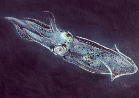 Squid by asemo