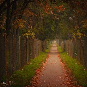 Old Path by ildiko-neer