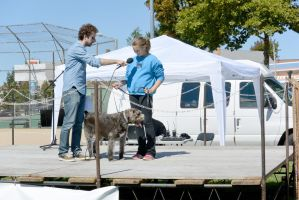 2014 Dog Festival, The Look Alike Contest 8 by Miss-Tbones