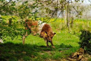 curious cow by rockmylife