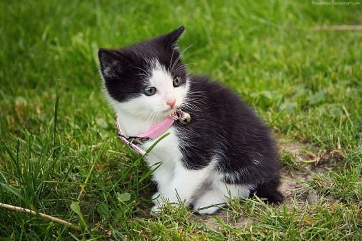Cute Kitten. by pasofino6