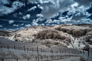IR Landscape by vw1956