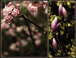 Spring Flowers by Bass4819