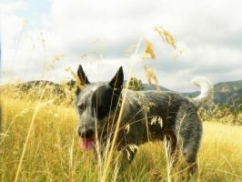 Dog in the grass by Sevian
