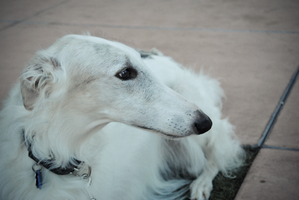 borzoi - made a few changes. by reckIess