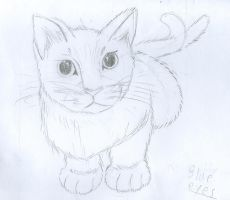 Fluffeh White Kitteh. by WingedWolfGirl