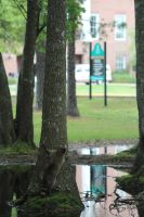 Coon on Campus by eillahwolf