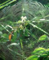 SPIDER WEB 2 by Kampungjati7