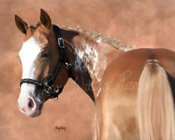 Kassi by paintwithoutpaint