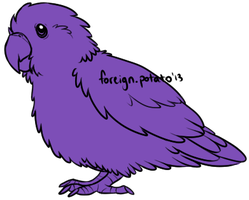 Parrotlet Lines by foreign-potato