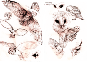Study of Owls by Sameien