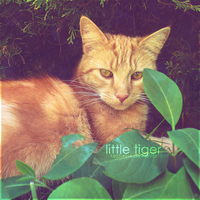 Little Tiger by Kezzi-Rose