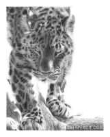 Amur Leopard by chandito