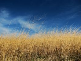 Prairie III by caitlinwithasea