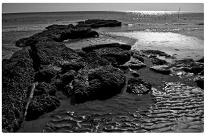beach- black and white by fifoux