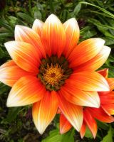 Orange Summer Flower by basement-ghost