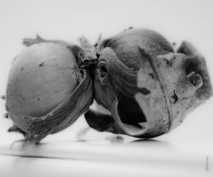 Nature morte by Rayon2lune