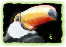 Toucan Tucano by jotapehq