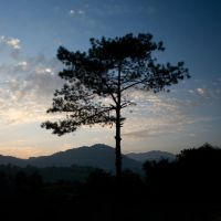 The Silhouette of Half a Tree by AbhaySingh1