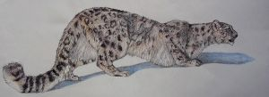 Snow Leopard - leopold by Saphyfluffy