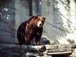 brown bear by SoBiEsKii