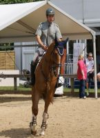 Ridden Chestnut Horse Stock 2 by TheArtisticChoice