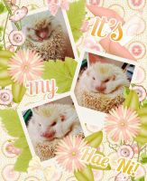 [Scrapbooking] My Pet,  Hae Ni! He's a hedgehod. by jangkarin