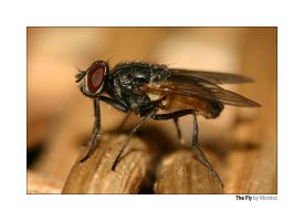 The Fly by mordoc